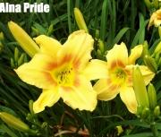 Alna Pride.jpg