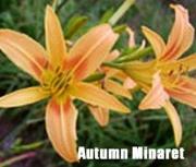Autumn_Minaret.jpg
