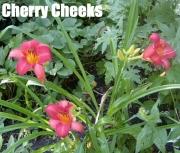CherryCheeks