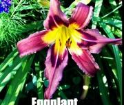 Eggplant Escapade.jpg