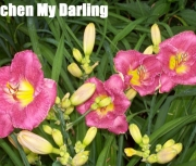 Gretchen my Darling