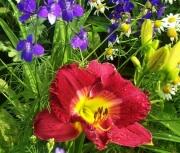 Munson seedling.jpg