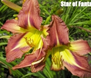star of fantasy 15