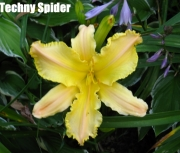 Techny Spider.jpg