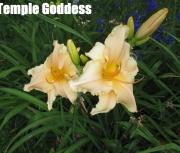 Temple Goddess.jpg
