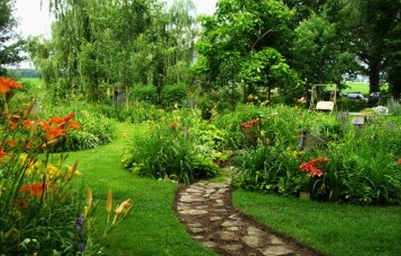Great Random Daylily Garden Images