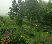 Random Daylily Garden Images