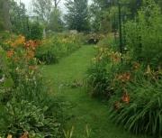 random daylily garden image 4