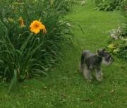 random- daylily garden-image-6