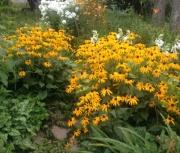random daylily garden image