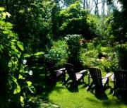 random daylily garden image7